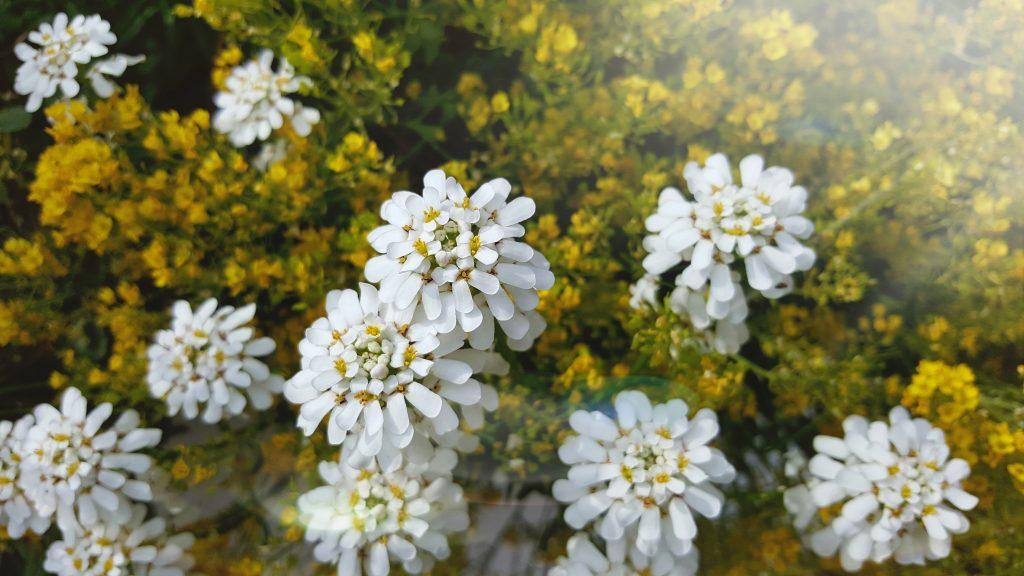 Hamburg: Blumen entlang der Elbe