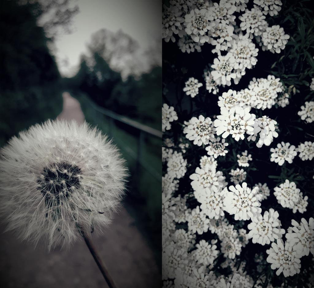 Wedel: Pusteblumen und mehr