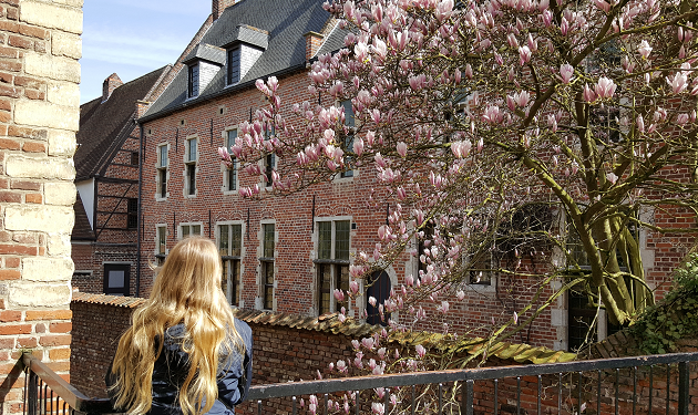 Leuven - Kirschblüten im Beginenhof_April