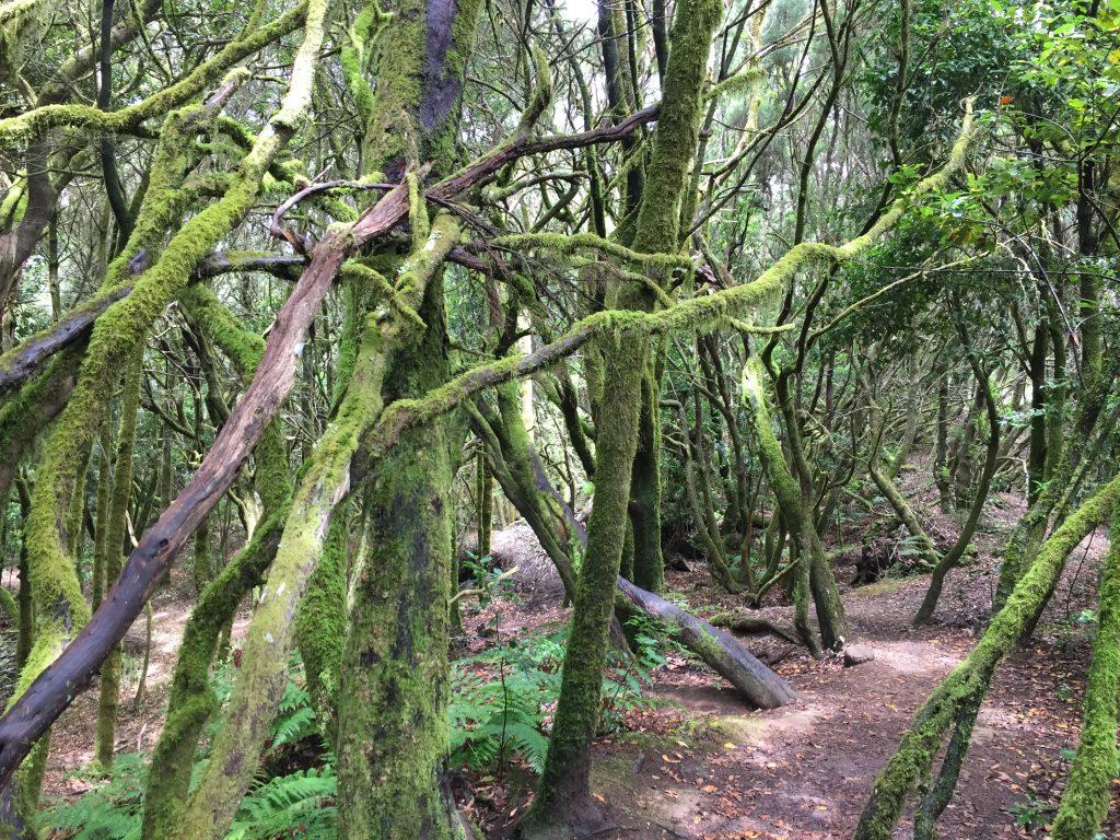 Im Lorbeerwald auf La Gomera ist es schön schattig